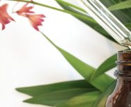 Chinese Herbal Medicine | Dr Jacobs Clinic Dorset